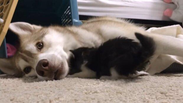 Pes a kočka. Foto: snímek obrazovky YouTube