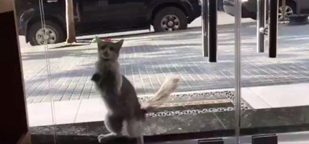 Kočka přišla na veterinární kliniku a začala klepat na dveře: lidem trvalo, než to pochopili a zapnuli fotoaparát