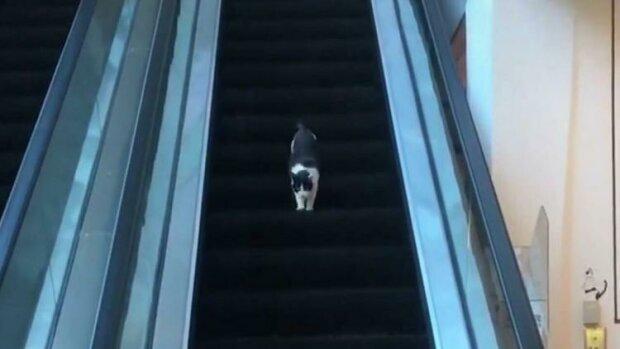 """""""Hlavní věcí je nevzdávat se"""": kočka, štěňata a muž proti eskalátoru"""