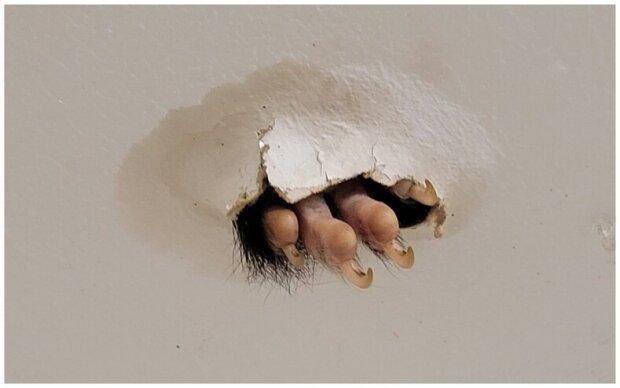 """""""Nezvaný host"""": Žena zašla do koupelny a byla vyděšená, když uviděla tlapku trčící z díry ve stropě"""