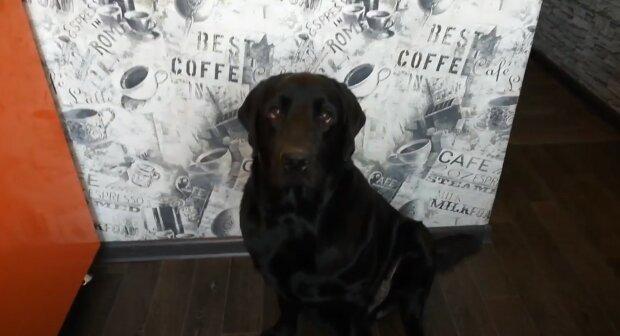 Zatímco čekal na milující majitele: Pes, který byl v útulku nejdéle, našel nový domov
