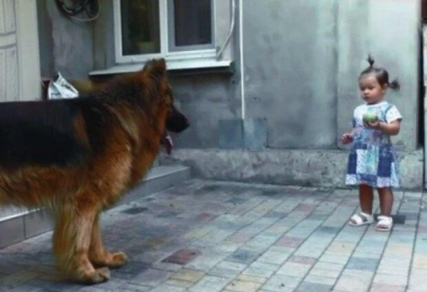 Nikdo nemiloval tohoto velkého psa, který žil na trhu, ale holčička ho litovala