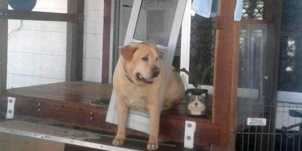 """""""Trochu přehnaný"""": dívka v době odjezdu požádala svého přítele, aby se postaral o psovi"""