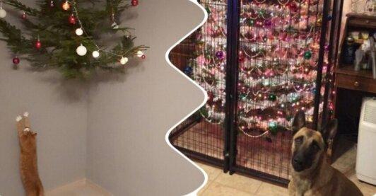 Majitelé zjistili, jak zachránit Nový rok od svých oblíbených mazlíčků