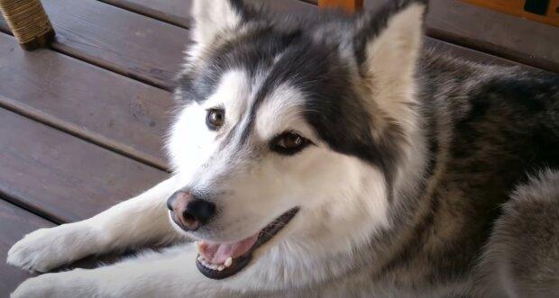 """""""Ten den bylo opravdu horko"""" : u útulku pro zvířata našel pes v tašce kočku, kterou vyhodili bývalí majitelé"""