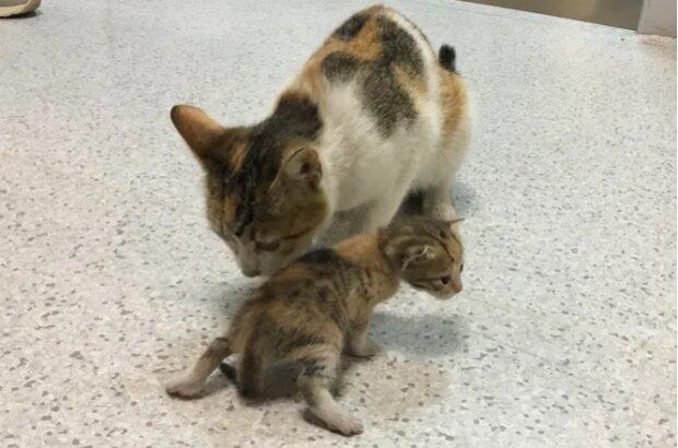 Kočka přinesla své kotě a lékaři neodmítli pomoc zvířatům