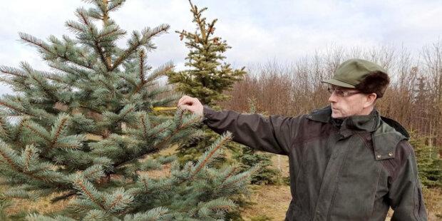 Jak pěstovat Vánoce na hektaru: Mojmír Pretsch pěstuje 8000 stromků na jednom hektaru