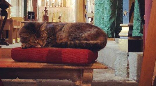 Na památku kočky bez domova uspořádala londýnská katedrála službu online
