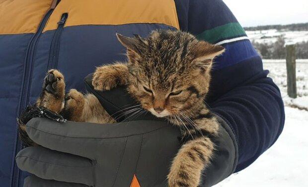 """""""Vzácný exemplář"""": záchranáři našli zmrzlé kotě a ukázalo se, že to je vzácné plemeno kočky"""