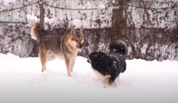 Psi. Foto: snímek obrazovky YouTube