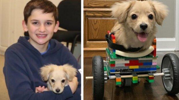 Dvanáctiletý chlapec vyrobil invalidní vozík pro štěně z Lega, které se nenarodilo jako všichni ostatní
