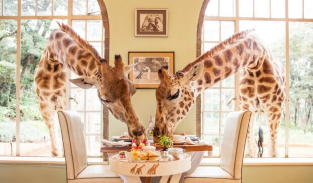 Fotografie: The Safari Collection