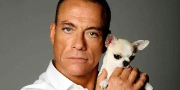 """Jak Jean-Claude Van Damme zachránil čivavu: """"ten, kdo vyplnil dokumenty, se mýlil"""""""
