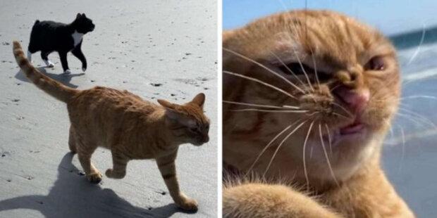 Majitelé zrzavé kočky poprvé vzali kočku na pláž: vypadá to, že se kočce moře nelíbilo