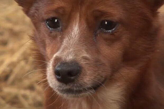 Pes vyčerpaný hladem odnesl ještě hladovější kočce pochoutku od kolemjdoucí
