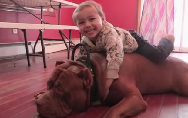 Pes a dítě. Foto: snímek obrazovky YouTube