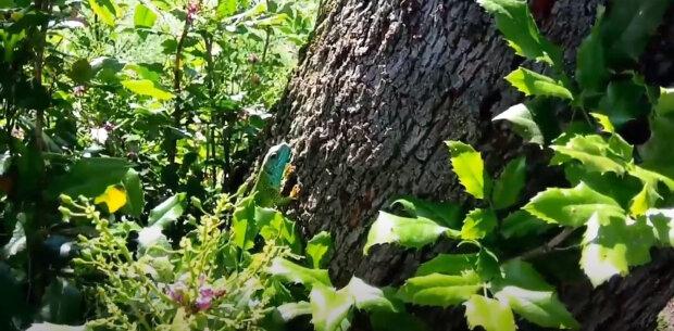 Každé jaro společně rozpustí listy a společně si užívají tepla letního slunce: Není to jen nějaký strom v lese