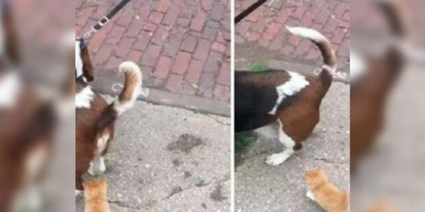 Muž se psem darovali toulavému kotěti, který se jich nebál, dům