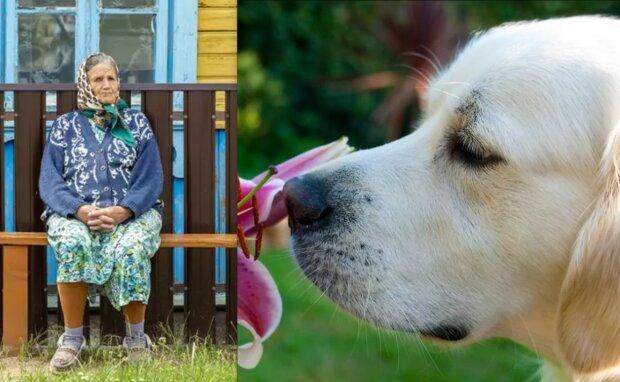 Sdílela osamělost: pes každý den nosil osamělé babičce dárky
