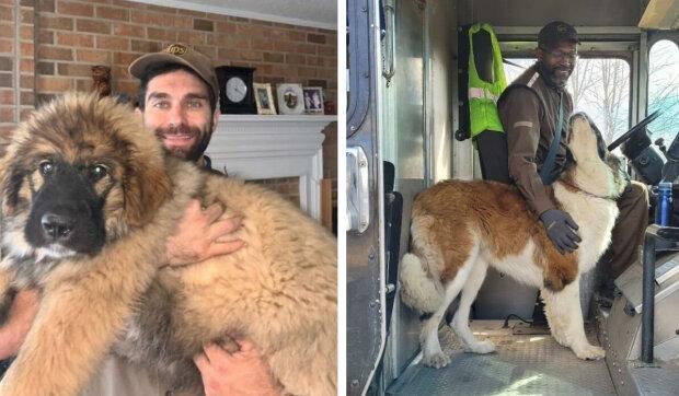 Jak se kurýrovi Seanovi McCarenovi podařilo vytvořit populární projekt o psech, se kterými se poštovníci setkávají na cestě