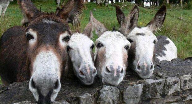 Roztomilé rodinné portréty zvířat ve volné přírodě