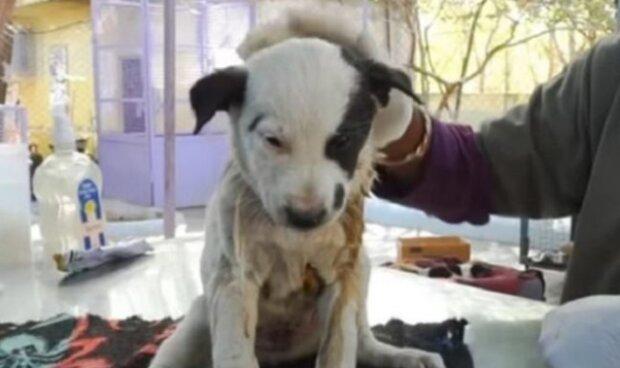Fenka bez domova zoufale štěkala a vybízela lidi, aby pomohli štěněti