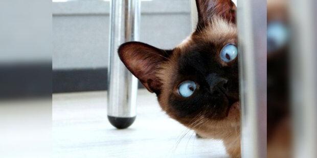 Nezávislí majitelé domu: jak zavolat kočku, aby přišla k vám