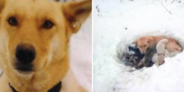 Turisté našli ve sněhu fenku, která svým teplem zahřála štěňata bez ohledu na chlad