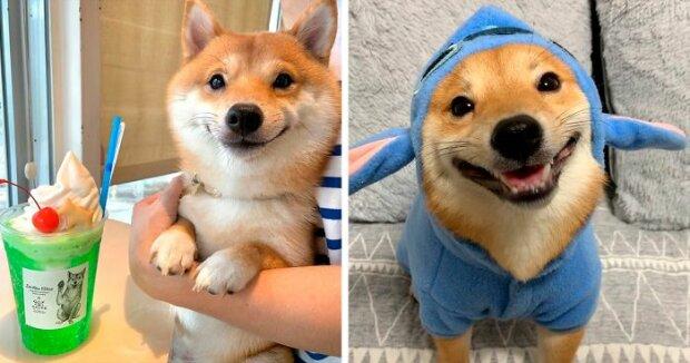 Japonské štěně s rozkošným úsměvem