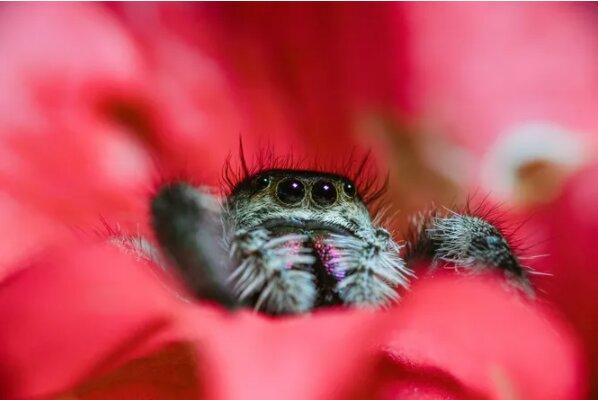 Byl zapotřebí dům: samice pavouka vyhnala ženu z auta a porodila tam 200 pavouků