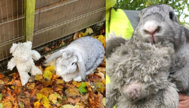 """Vystrašený králík hozený do krabice se chytil svého milovaného medvěda: """"Žádný mazlíček by neměl zůstat v chladu."""""""