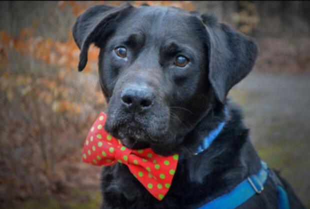 Pes, který byl v útulku nejdéle, našel nový domov