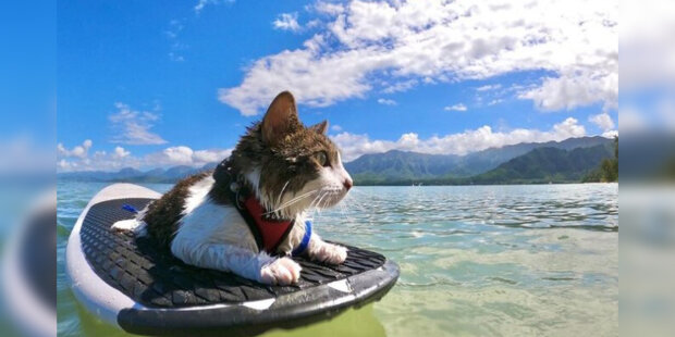 Hokulea je kočka z útulku, která v sobě objevila nečekanou vášeň pro surfování