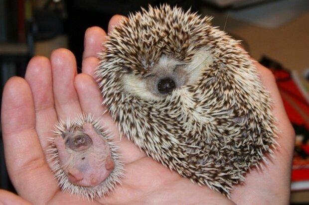 Patnáct zvířat, která jste neviděli novorozenými