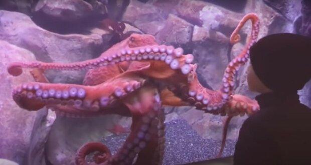 Výzkum: chobotnice plácají ryby, aby se dobře chovaly. Videa s důkazy se objevila na internetu