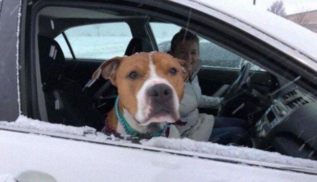 30 noh, 3 000 km a 3 noci: vánoční příběh hodného psa, který se vrací domů