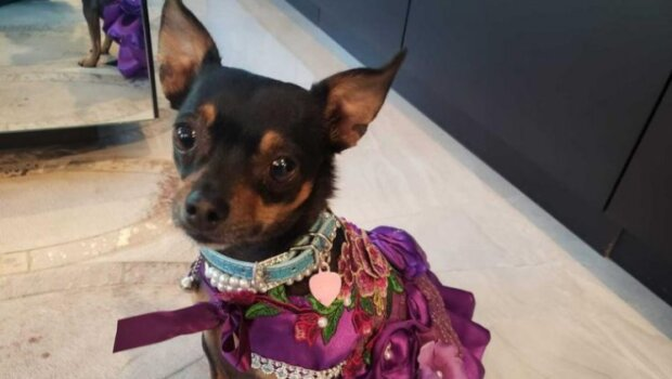 Šperky a leopardí šaty: žena utratila 10 tisíc dolarů na oblečení pro psa z útulku