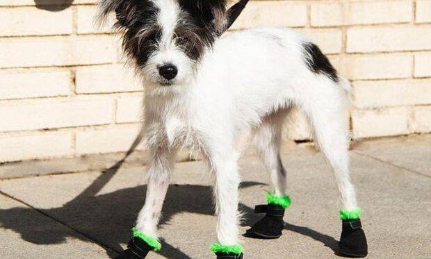 """""""Péče o domácí mazlíčky"""": designer přišel s exkluzivními botami pro psy"""