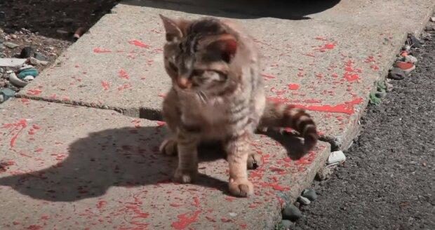 """""""Vyzvedli jsme na ulici toulavé kotě, po třech měsících jsme si uvědomili, že ho chceme pustit na svobodu»"""