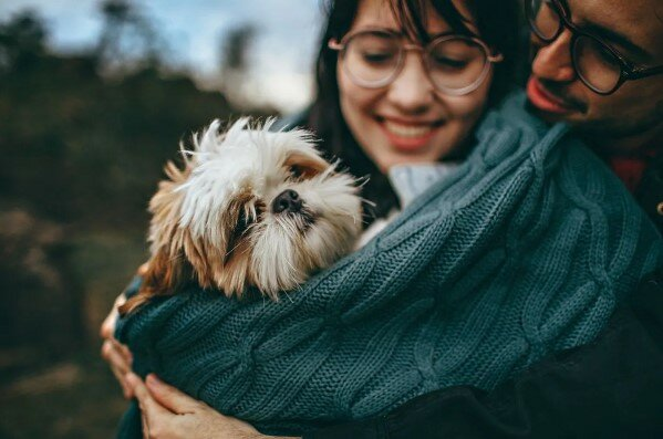 Proč byste si měli vzít zvíře do svého domova z útulku a ne z obchodu: pět dobrých důvodů