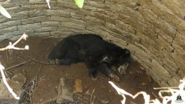Muž našel medvěda ve studně, která měla hloubku kolem 12 metrů a rozhodl se mu pomoci