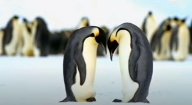 """""""Kdyby se to stalo 50 metrů od nás, určitě bychom to v životě neviděli"""": Fotky žlutého tučňáka se objevily na sociálních sítích"""