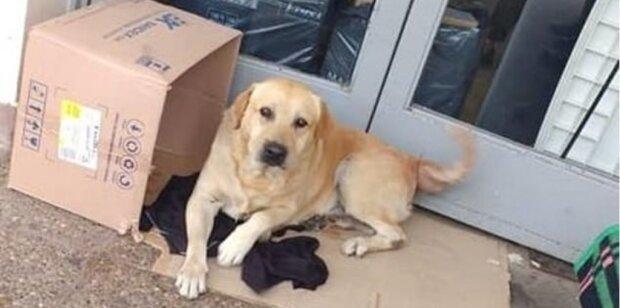 Oddaný pes čeká na majitele u dveří nemocnice po dobu 2 týdnů, majitel ale nevyjde