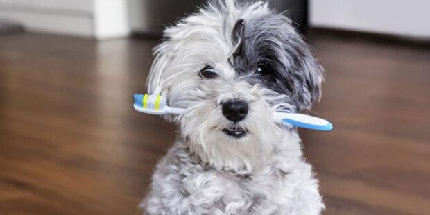 Zubní klinika najala psa zubaře: Jak pes pomáhá lidem překonat strach