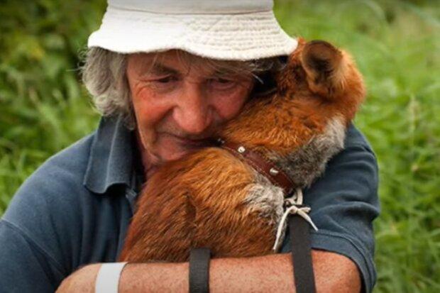 Zachránil, a litoval toho: lišky mají velmi rádi svého kamaráda, pana Gibbonse. Myslel si, že vyrostou a zůstanou v lese, ale mýlil se