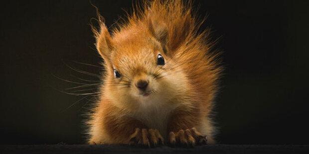 Malý veverčák ležel na krajnici a nemohl chodit: Veterinář nepomohl, muž si sám vymyslel, jak zvíře vyléčit