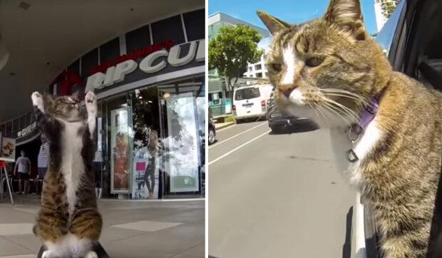 Dija je kočka, která se díky své inteligenci dostala do Guinnessovy knihy rekordů