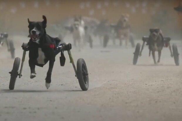 """""""Hry Neporazitelných"""": skupina psů dokázala, že ve své oblíbené činnosti nemají žádné překážky"""