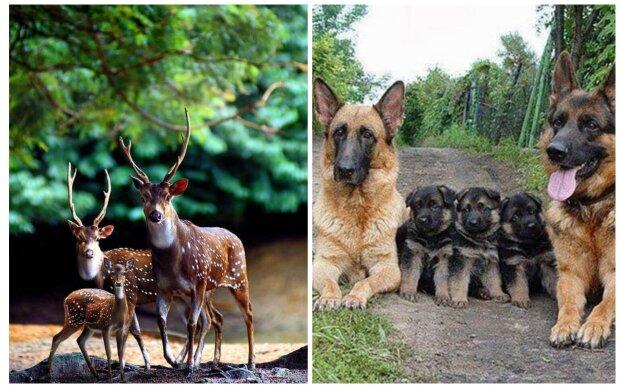 Rodinné portréty zvířat ve volné přírodě: divoká zvířata nejsou připravena fotografům pózovat a žíjí si vlastním životem