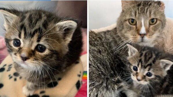 Malé kot`átko kňučelo bez ustání. Naštěstí pro něj byl nalezen adoptivní dědeček. Vychoval ho zkušený kocour